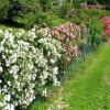 Le piante del giardino in fioritura dopo diserbo e concimazione