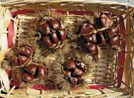 Ricci di castagne con numerose castagne all'interno di ogni riccio