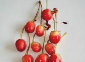 Come si presentano le ciliegie colpite dall'aborto dell'embrione