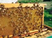 controllo del melario apicoltura