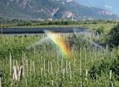 Irrigazione del meleto con impianto a pioggia