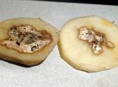 Tubero di patata colpito da marciume secco dove già presente «cuore cavo»