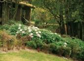 A fine primavera è ancora possibile, se necessario, potare siepi arbusti e alberi