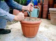 Il rinvaso degli agrumi: la terra deve essere poco umida