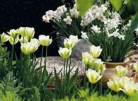 Bulbose da fiore