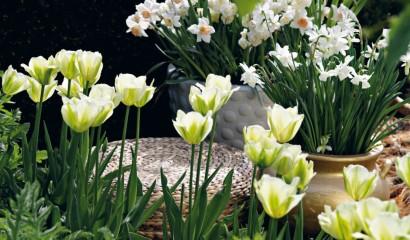 Piantate bulbose e tuberose che fioriranno in primavera