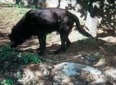 Cane riparato dal sole sotto gli alberi all'interno del recinto