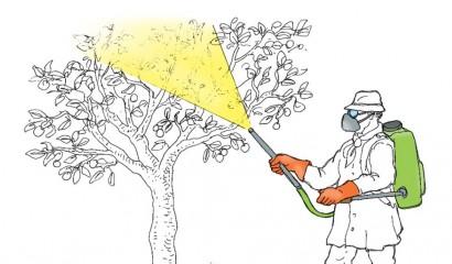 Illustrazione di concimazione del melo con irroratrice a spalla