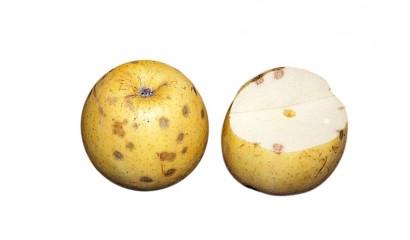 Mele colpite da butteratura amara del melo