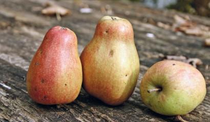 Mele e pere, tutti i tipi sono adatti al consumo per i diabetici