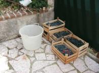 Cassette di uva pronte per la vinificazione casalinga