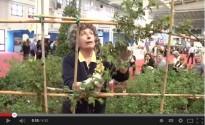 Anna Furlani Pedoja spiega la coltivazione e la potatura delle rose
