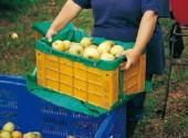Cassetta per la raccolta delle mele con fondo apribile