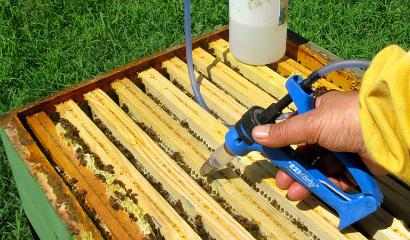 Trattamento invernale contro la varroa con acido ossalico gocciolato