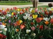 I tulipani del Castello di Pralormo