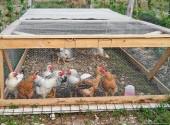 gabbia mobile polli pollaio galline avicoli