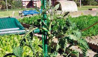 tondino ferro orto pomodoro