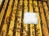 apiguard-trattamento-tampone-varroa