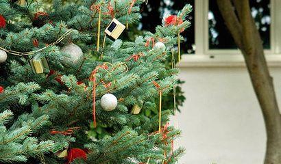 Albero di Natale già trapiantato in un giardino di campagna