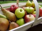 Cesto di mele e pere