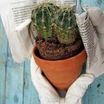 Come togliere dal vaso una pianta grassa con spine
