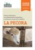 Come realizzare un allevamento familiare e ottenere un piccolo reddito<br>LA PECORA