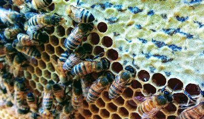 api-miele-nutrizione-inverno-vita-in-campagna-410×240