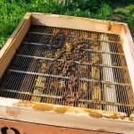 apicoltura nutrizione naturale 01