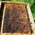 apicoltura nutrizione naturale 02