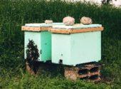 Nuclei artificiali api apicoltura acaro varroa – Vita in Campagna
