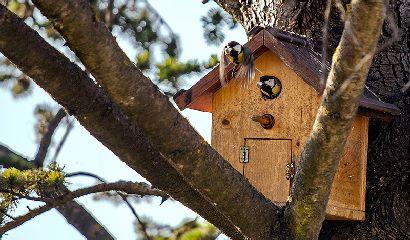 Nido artificiale ospita cinciallegre – Giardino – Uccelli della campagna- Vita in Campagna