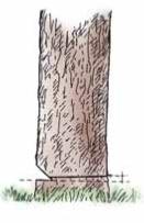 taglio-e-abbattimento-del-bosco-ceduo2