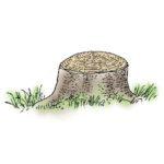 ceppaia-a-cupola-lavori-taglio-bosco-vita-in-campagna