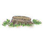 ceppaia-a-spiovente-lavori-taglio-bosco-vita-in-campagna