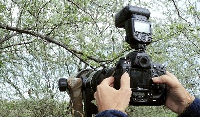 maurizio-bonora-birdwatching-fotografia-naturalistica-uccelli-campagna-reflex