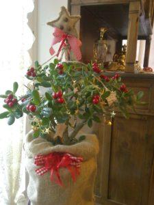 crassula-ovata-albero-di-natale