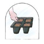 semina-in-contenitori-alveolati-sotto-protezione