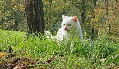 gatto giardino prato