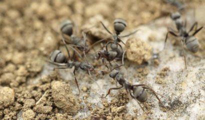 formiche-infestazione-casa-di-campagna-vita-in-campagna