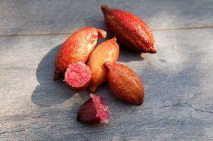 Frutti Citrus Australasica – Copia