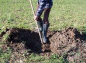 scasso a buche impianto nuovo albero da frutto vita in campagna