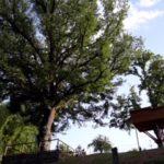 1_ casetta e albero monumentale