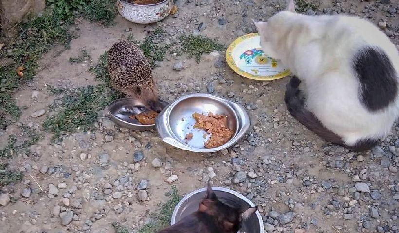 riccio-riccardino-gatti-chatillon-aosta