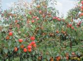pianta-carica-frutti