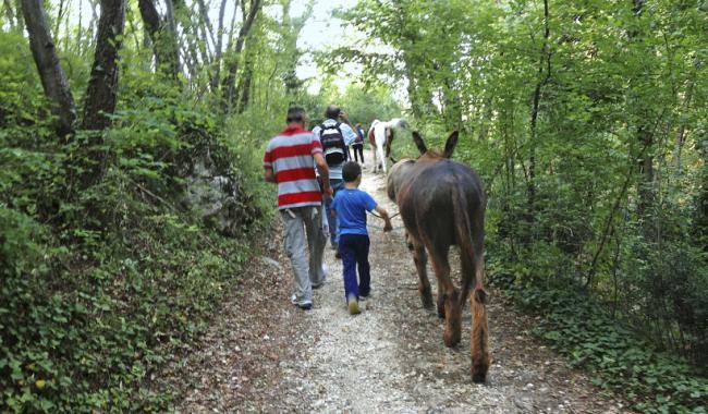 passeggiata nel bosco con gli asini trekking someggiato – Copia (2)