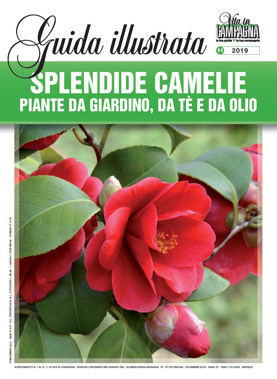 novembre-2019-guida-camelie-ok
