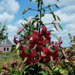 Miss Feya garden(Media)_comp