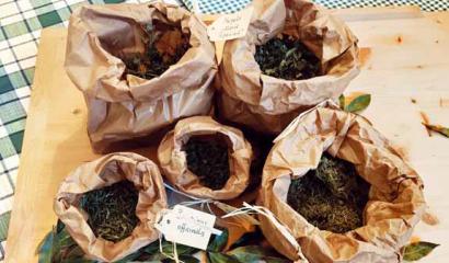 piante-aromatiche-essiccate