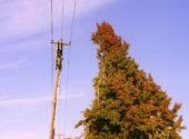albero-ingombrante