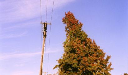Cosa fare quando un albero diventa troppo alto o ingombrante